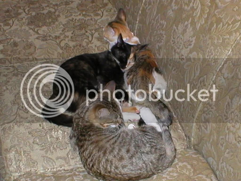 the kittens!