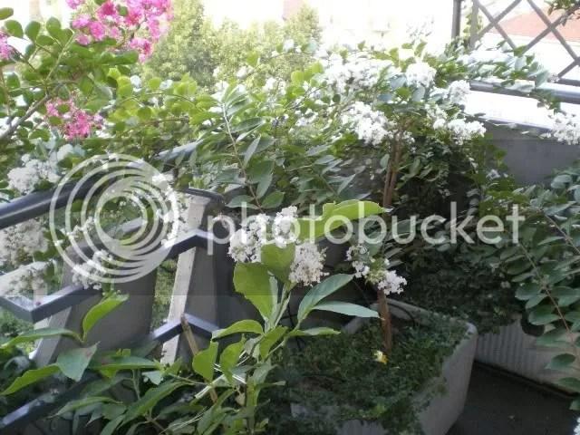 Qualche fioritura di agostosettembre sul mio terrazzo