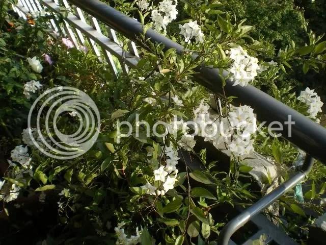 Settembre ancora fiori  Forum di Giardinaggioit