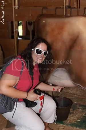 Christina milking a cow