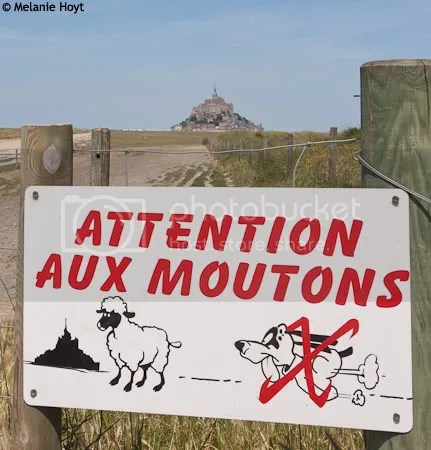Attention aux Moutons
