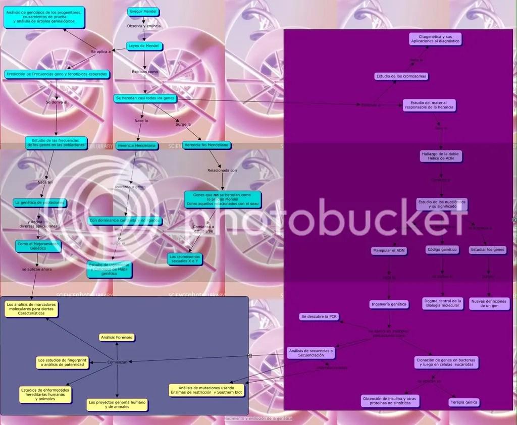 Mapaconceptual de como nacio la genética