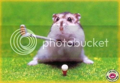 Entrenar un hamster es sencillo