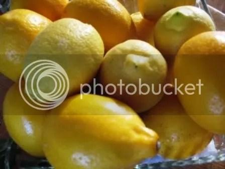 Lemons_reg_Meyer