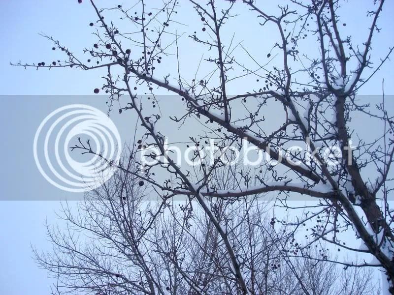 Antoher Tree