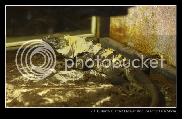 2010 北區花鳥蟲魚展 (爬蟲類篇) - 兩爬聚會及寵物展覽 - 香港兩棲及爬蟲協會 論壇 - Powered by Discuz!