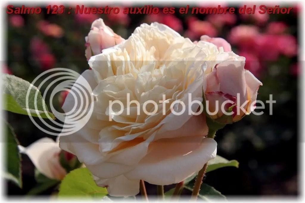 Salmo123Nuestroauxilioeselnombredel.jpg Salmo 123 Nuestro auxilio es el nombre del Señor picture by franciscomartin