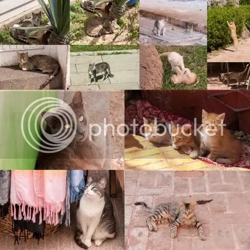 Katten in Marokko