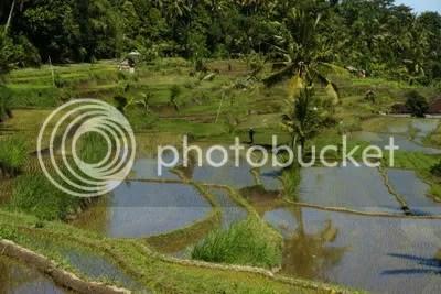 Landschap op Bali