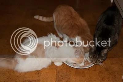 """Samen met zijn """"broertjes"""" een bord eten delen."""