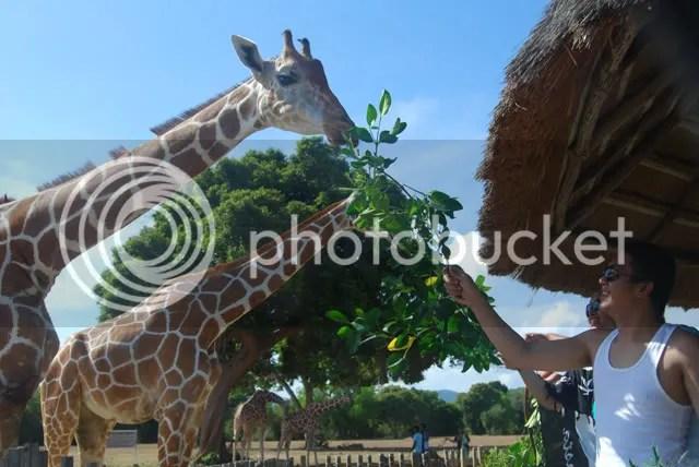 Calauit Safari