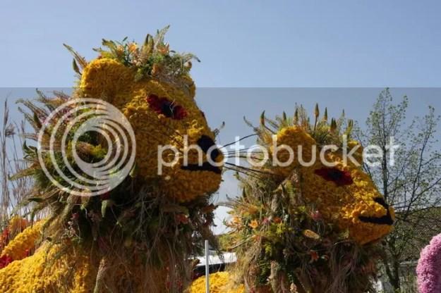 Парад цветов (c) voivoi.net