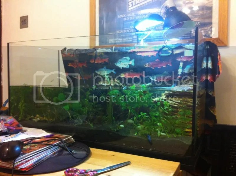 a large glass fish tank half-full of water and submerged plants