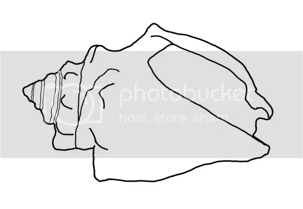 Florida fighting conch coloring page seashells by millhill for Shells coloring page