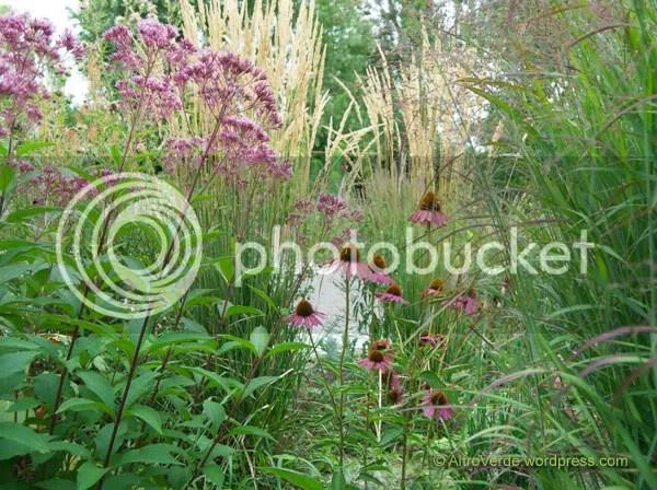 Again a smaller eupatorium atropurpureum, echinacea purpurea 'Rubinzwerg' and panicum virgatum 'Shenandoah'