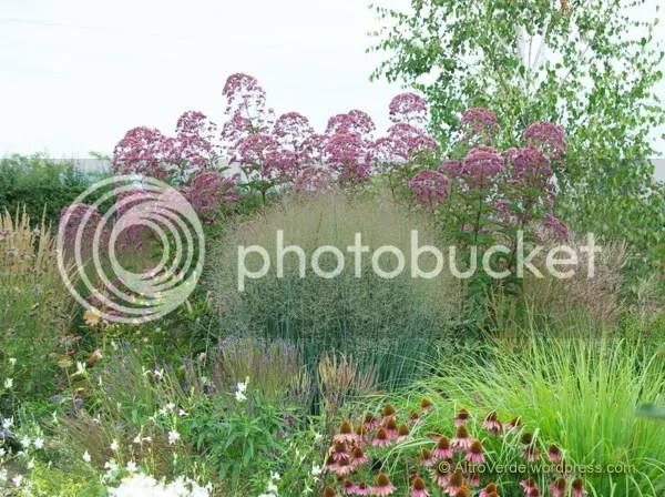 Eupatorium atropurpureum, panicum virgatum 'Heavy Metal', echinacea purpurea 'Magnus', pennisetum alopecuroides 'Moundry' and gaura lindheimeri