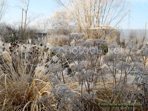 Achillea 'Hella Glashoff' on the right is ephemeral and held up by some pennisetum 'Magic' stems, in the background there's echinacea purpurea seed heads