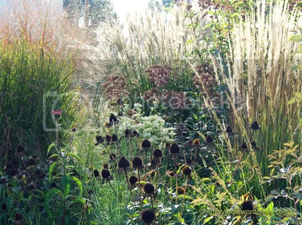 The late summer flowering allium tuberosum state its pale shade of white against those black blocks