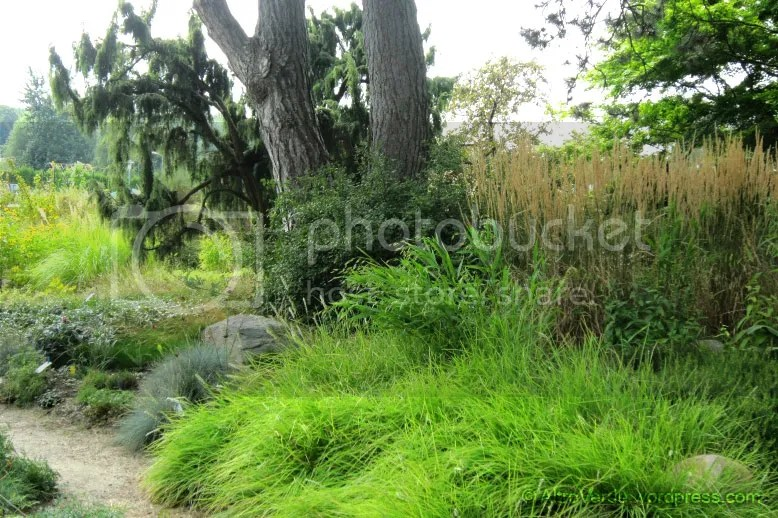 the back garden, you can see Calamagrostis x acutiflora 'Karl Foerster' on the middle right