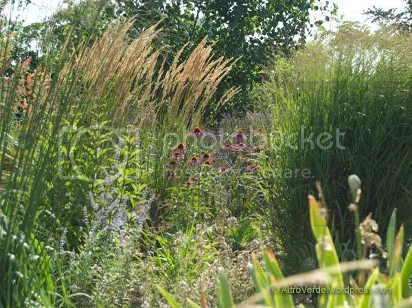 Similar view but from another point. Here are perowskia atriplicifolia and calamagrostis acutiflora 'Stricta' in addition