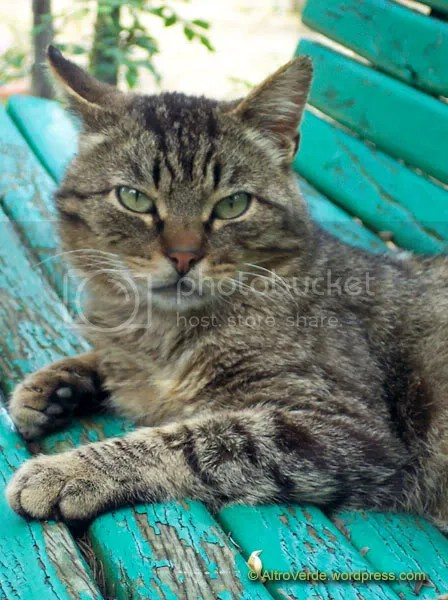 Pissed off cat on a vintage bench