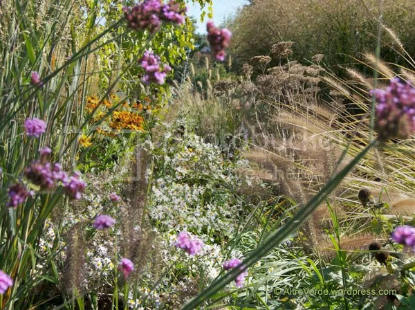 This is exactly what I meant with 'messed up' but the look is pretty, with all those stratifications of old glories (like the achillea skeletons), reblooms (like helenium 'waldtraut' and the workaholic verbena bonariens) and new features (like the white native asters)