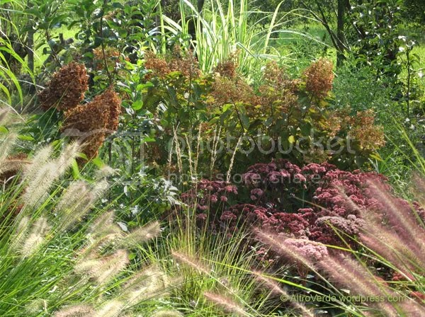 Pennisetum 'Hameln' and 'Magic' form a kind of gate you have to pass by to see a sedum block ('Xenox' and 'Matrona', mostly) and a small calamagrostis 'Overdam'