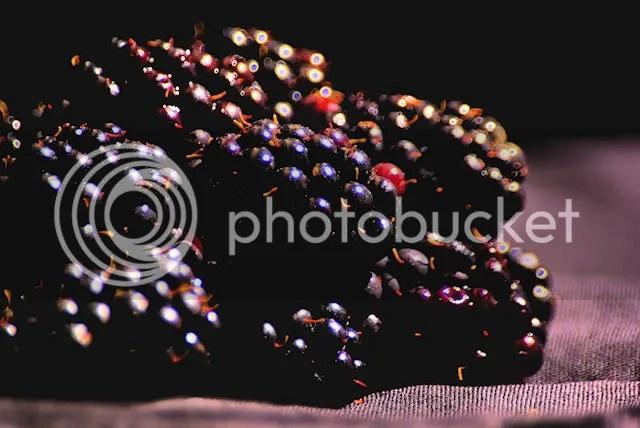 fruit blackberry photo: Blackberrys SG102809-copy_640.jpg