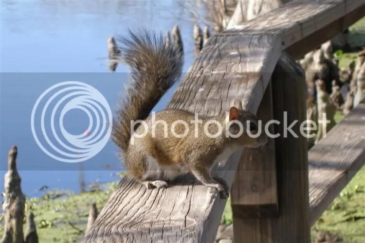 squirrel park