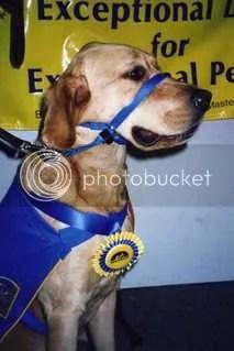 At Puppy Graduation- So Handsome!