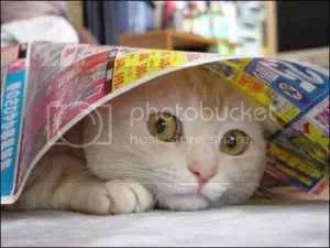 scared cat Pictures, Images and Photos
