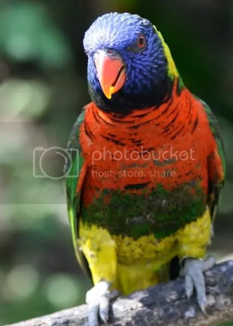 A Colorful Bird Pictures, Images and Photos
