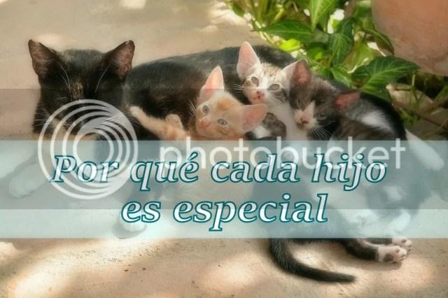 photo gatitos-hijos-especiales_zpstyyfl1nz.jpg