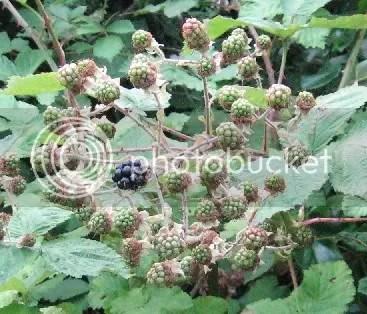 first blackberry