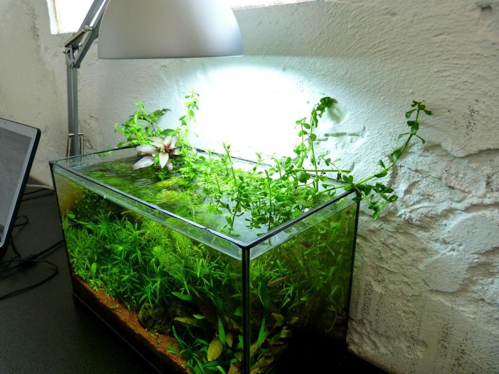 Clairage Dun Aquarium Ouvert