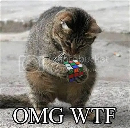 OMG Kitten with rubix cube