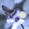 butterfly Pictures, Images and Photos