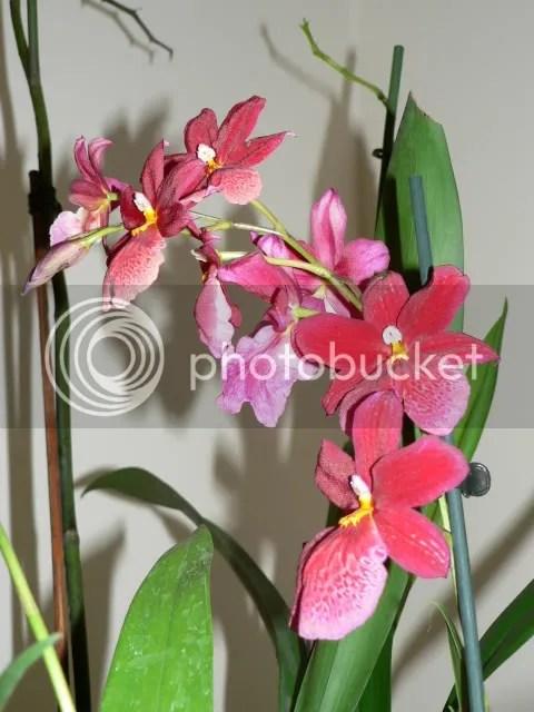 Giardinaggio Forum Orchidee