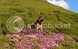 Domnul Wolf vara pe Ciucas la Rhododendron