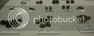 nutsfoundinJomonsettlementKawasakiC.jpg Nut remains Jomon ruins picture by Heritageofjapan