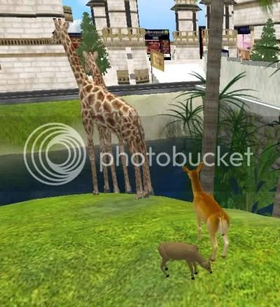 Hey, Mr Giraffe? Have you seen Thumper around?