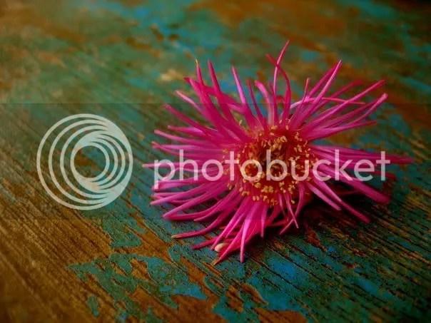A flower David (orphan) gave me at Umuryango.