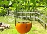 bird feeder, via http://www.justcraftyenough.com/2011/12/weekend-eye-candy-11/