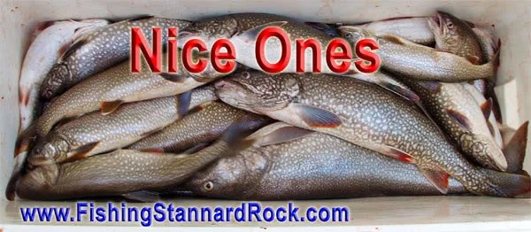 NiceOnes Stannard Rock Lake Trout   Filling the Cooler