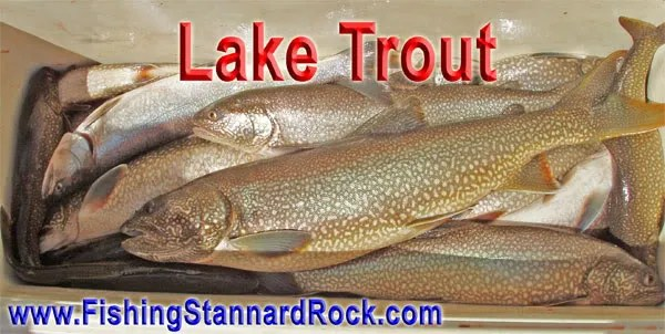 coolerLakeTrout Stannard Rock Lake Trout   Filling the Cooler