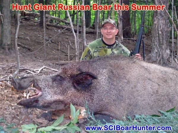 Giant Russian Boar in Michigan's wild and scenic Upper Peninsula