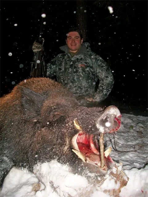 Russian Boar Hunting Authentic Boar Hunting In The Usa