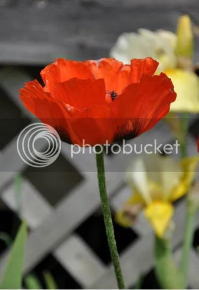 DSC_0314 flower