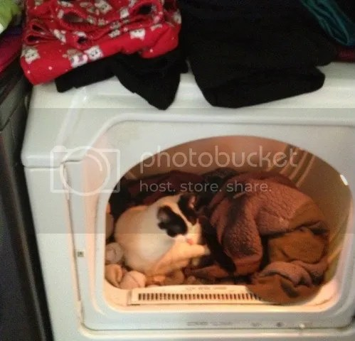 Nara in dryer