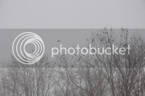 photo 01d8cc07-3ee8-40bd-936f-2cfac3b40620_zps480a7c23.jpg